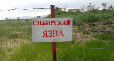 Village closed for quarantine, five people hospitalized with anthrax assumption in Akmola region