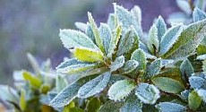In 7 regions of Kazakhstan expected frosts